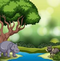 Animale selvatico in natura