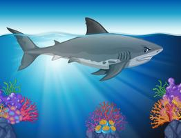 Grande squalo bianco nuota nell'oceano