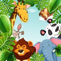 Animali selvaggi e foglie attorno al confine