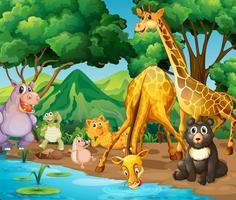 Animali selvaggi che bevono dal fiume vettore