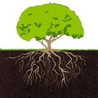 Schizzo di radici dell'albero vettore