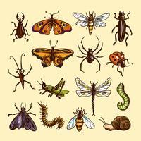 Set di schizzo di insetti