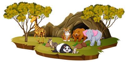 Scena di montagna con molti animali