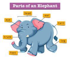 Diagramma che mostra parti di elefante