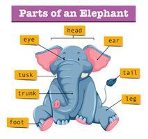 Diagramma che mostra parti di elefante vettore