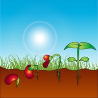 pianta in crescita vettore