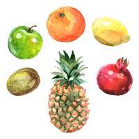Set di frutti ad acquerelli vettore