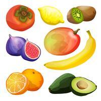 Set di frutti esotici vettore