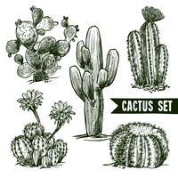 Set di schizzo di cactus vettore