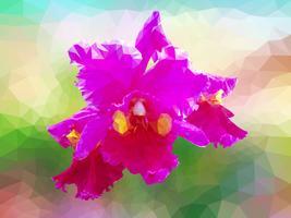 Orchidea vettoriale poligono