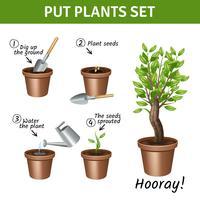 Mettendo le icone delle piante messe vettore
