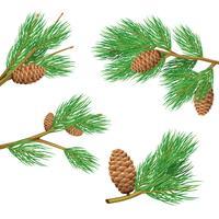 Set di rami di pino vettore