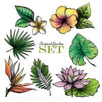Foglie tropicali Set Color vettore