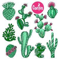 Set di cactus di colore vettore