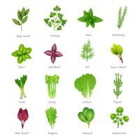 Set di icone di erbe