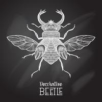 scarabeo della lavagna decorativo