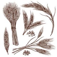 Set di schizzo di grano