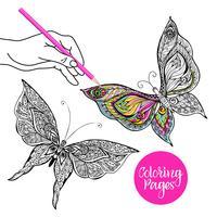 Illustrazione a colori farfalla vettore