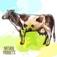 Illustrazione di schizzo di mucca vettore