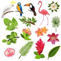 Set di pittogrammi di uccelli e piante tropicali vettore