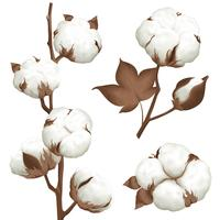 Set realistico di cotone Plant Boll vettore