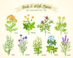 Insieme del fondo dei fiori selvaggi e delle erbe vettore