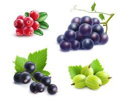 Set di frutti realistici