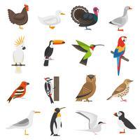 Set di icone di colore piatto uccello vettore