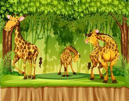 Giraffa nella scena della natura vettore
