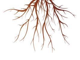 Illustrazione isolata radice di albero vettore