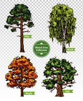 Set di alberi di schizzo a colori