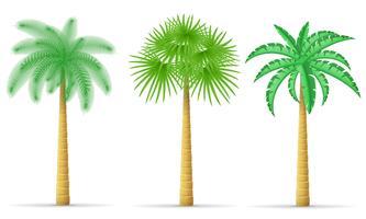 illustrazione vettoriale di palma
