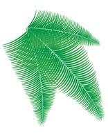 illustrazione vettoriale ramo di palma