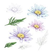 Disegno fiore margherita. Insieme floreale inciso disegnato a mano di vettore. Schizzo di inchiostro nero di camomilla. vettore