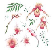 Elementi floreali di orchidea fiori tropicali in mano disegnare stile. Vettore