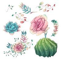 Piante grasse. Mano di cactus disegnato su uno sfondo bianco. Fiori nel deserto Disegno vettoriale di piante grasse