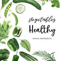 Struttura organica dell'acquerello delle verdure verdi, cetriolo, piselli, broccoli, sedano, sani con progettazione del texct, illustrazione di vettore dell'acquerello