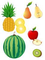 frutta vettore