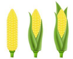 illustrazione vettoriale di mais