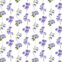 lavanda viola botanico su bianco vettore