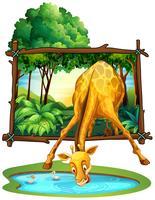 Acqua potabile della giraffa nella giungla vettore