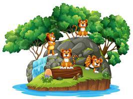 Tigre a natura isolata