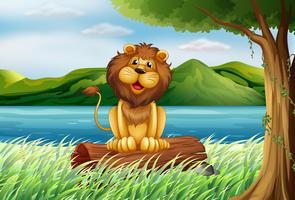 Un leone sulla riva del fiume