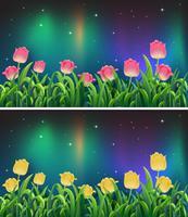 Scene con fiori di tulipano rosa e giallo durante la notte