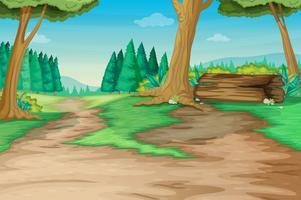 Sentiero forestale