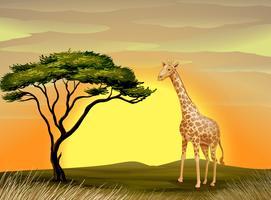 una giraffa sotto l'albero vettore