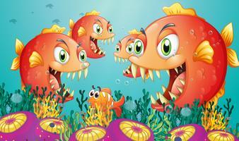 Una scuola di piranha sotto il mare