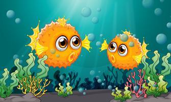 Due pesci palla sotto il mare vettore
