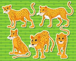 Leopardo vettore