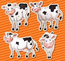 mucche vettore